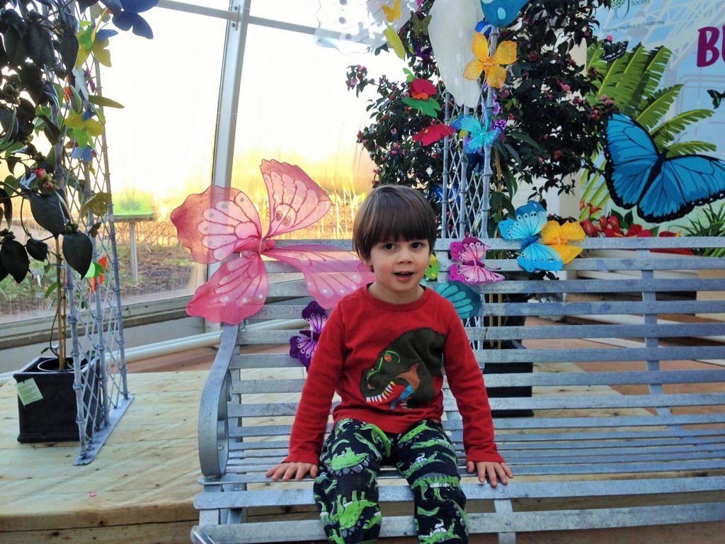 my boy and the butterflies