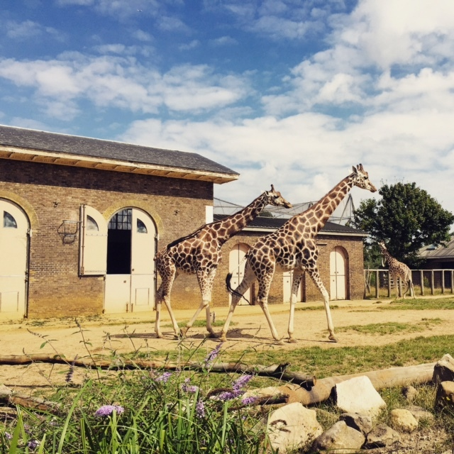 London Favourites: The London Zoo