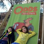 A Day Out At Odds Farm Park